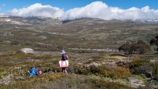 Fieldwork at Mt Kosciuszko, NSW